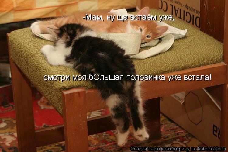Котоматрица: -Мам, ну ща встаём уже,  смотри моя бОльшая половинка уже встала!