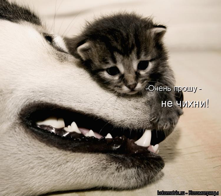 Котоматрица: -Очень прошу -  не чихни!