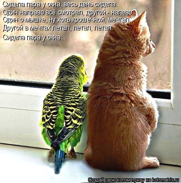 Котоматрица: Сидела пара у окна, весь день сидела. Один направо всё смотрел, другой - налево. Один о мышке, ну хоть крошечной, мечтал, Другой в мечтах летал,