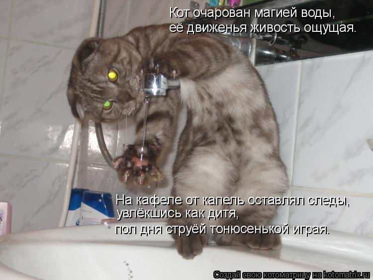 Котоматрица: Кот очарован магией воды, её движенья живость ощущая. На кафеле от капель оставлял следы, увлёкшись как дитя,  пол дня струёй тонюсенькой иг