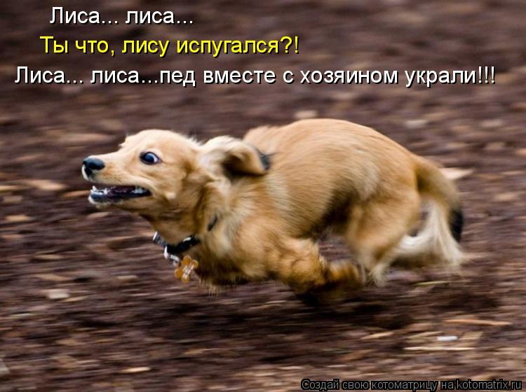 Котоматрица: Лиса... лиса... Ты что, лису испугался?! Лиса... лиса...пед вместе с хозяином украли!!!