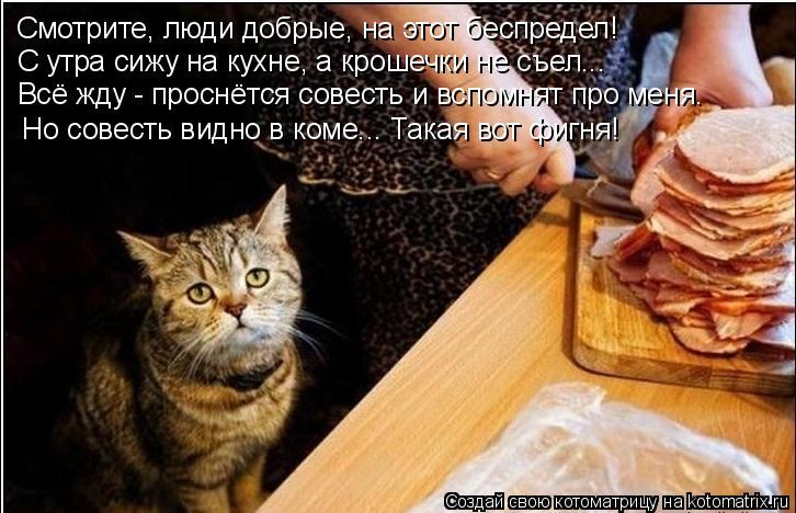 Котоматрица: Смотрите, люди добрые, на этот беспредел! С утра сижу на кухне, а крошечки не съел... Всё жду - проснётся совесть и вспомнят про меня. Но совест