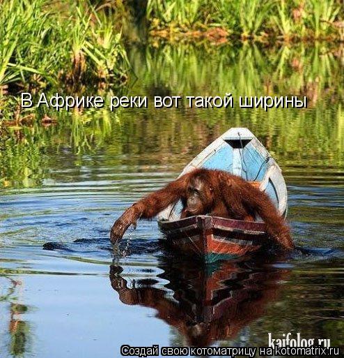 Котоматрица: В Африке реки вот такой ширины