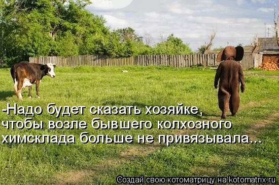 Котоматрица: чтобы возле бывшего колхозного  -Надо будет сказать хозяйке,  химсклада больше не привязывала...