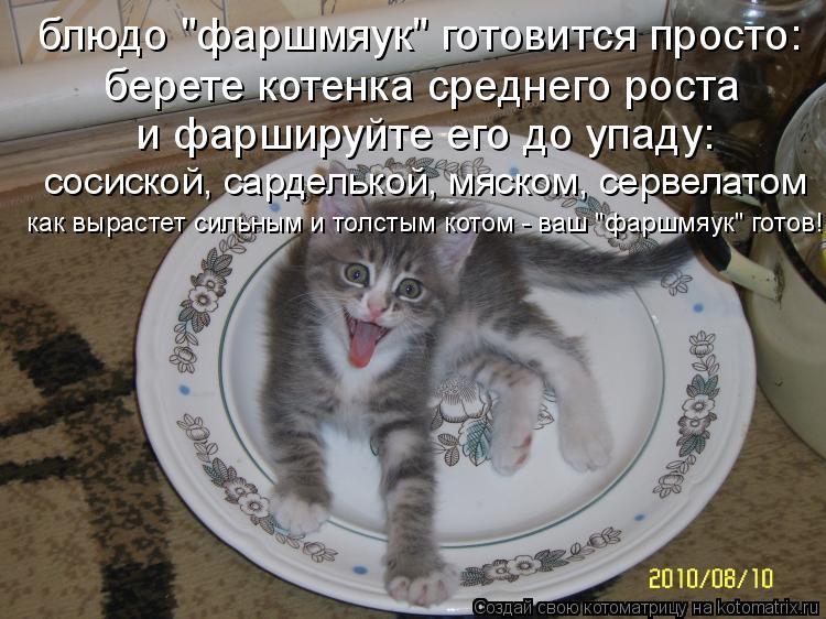 """Котоматрица: блюдо """"фаршмяук"""" готовится просто: берете котенка среднего роста и фаршируйте его до упаду: сосиской, сарделькой, мяском, сервелатом как выр"""