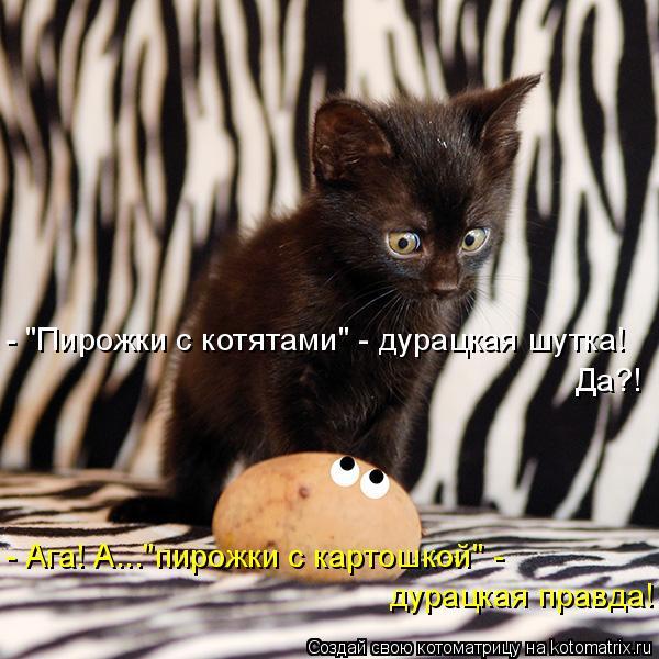 "Котоматрица: Да?! - Ага! А...""пирожки с картошкой"" -  - ""Пирожки с котятами"" - дурацкая шутка!  дурацкая правда!"