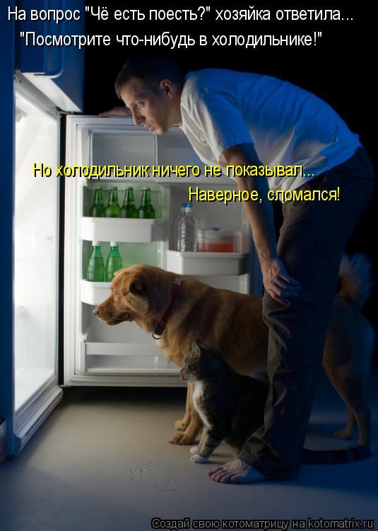 """Котоматрица: На вопрос """"Чё есть поесть?"""" хозяйка ответила... """"Посмотрите что-нибудь в холодильнике!"""" Но холодильник ничего не показывал... Наверное, сломалс"""
