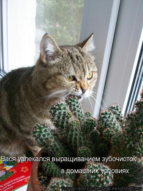 Котоматрица: Вася увлекался выращиванием зубочисток в домашних условиях