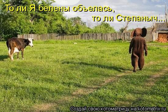 Котоматрица: То ли Я белены объелась, то ли Степаныч...