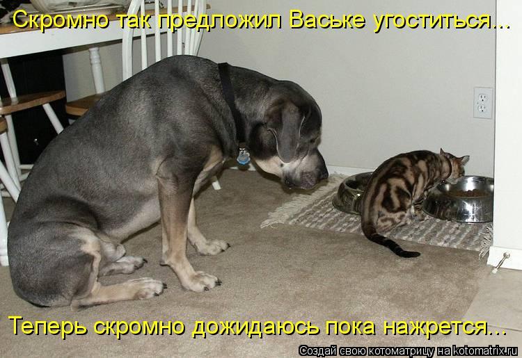 Котоматрица: Скромно так предложил Ваське угоститься...  Теперь скромно дожидаюсь пока нажрется...