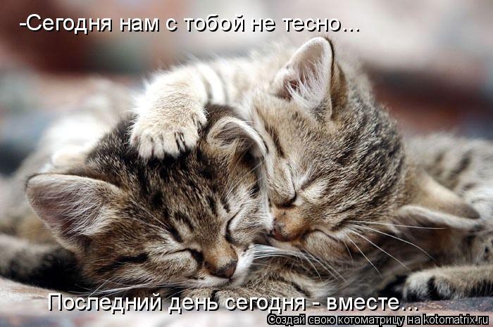 Котоматрица: -Сегодня нам с тобой не тесно... Последний день сегодня - вместе...