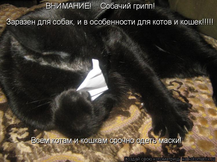 Котоматрица: ВНИМАНИЕ!    Собачий грипп! Заразен для собак, и в особенности для котов и кошек!!!!! Всем котам и кошкам срочно одеть маски!