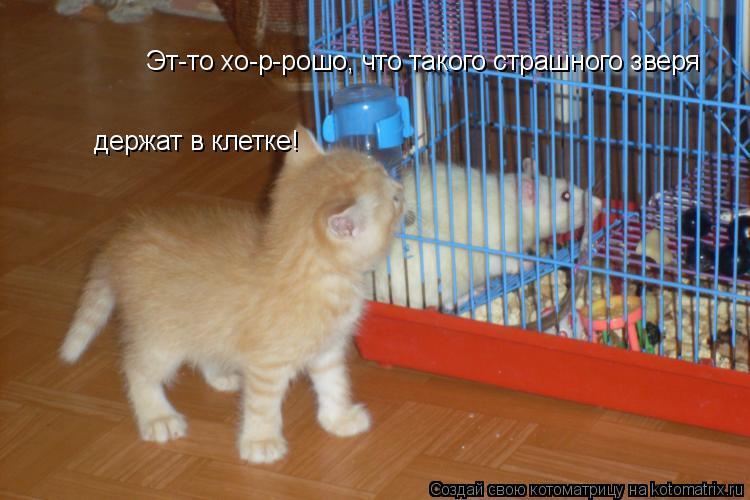 Котоматрица: Эт-то хо-р-рошо, что такого страшного зверя держат в клетке!
