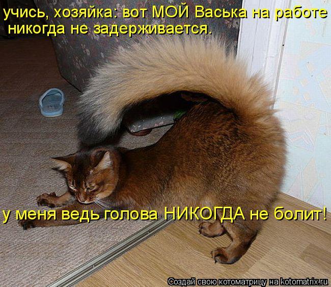 Котоматрица: учись, хозяйка: вот МОЙ Васька на работе  никогда не задерживается. у меня ведь голова НИКОГДА не болит!