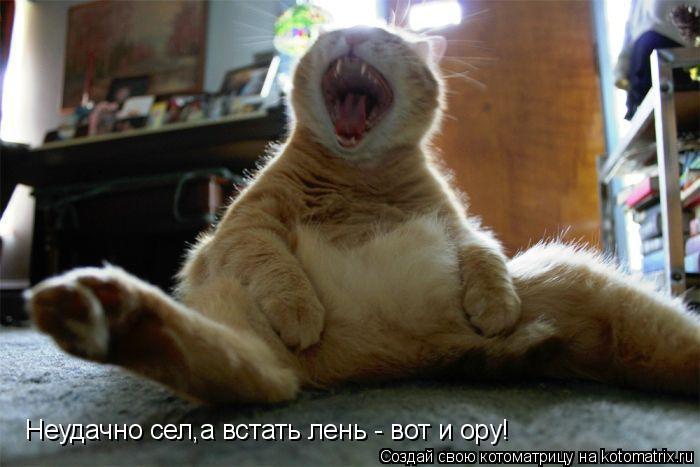Котоматрица: Неудачно сел,а встать лень - вот и ору!