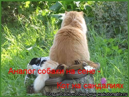 Котоматрица: Аналог собаки на сене -  Кот на сандалиях