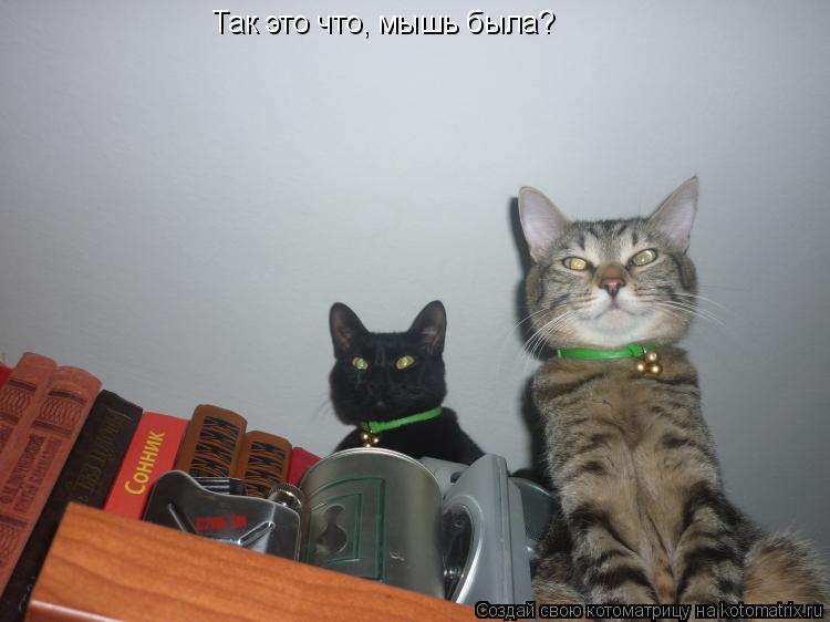Котоматрица: Так это что, мышь была?