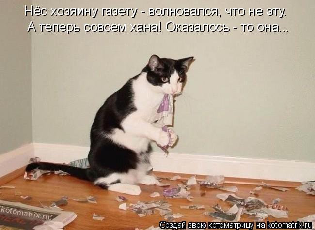 Котоматрица: Нёс хозяину газету - волновался, что не эту. А теперь совсем хана! Оказалось - то она...
