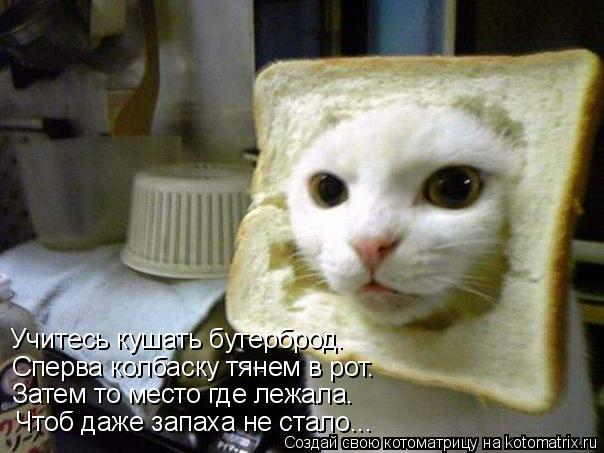 Котоматрица: Учитесь кушать бутерброд. Сперва колбаску тянем в рот. Затем то место где лежала. Чтоб даже запаха не стало...