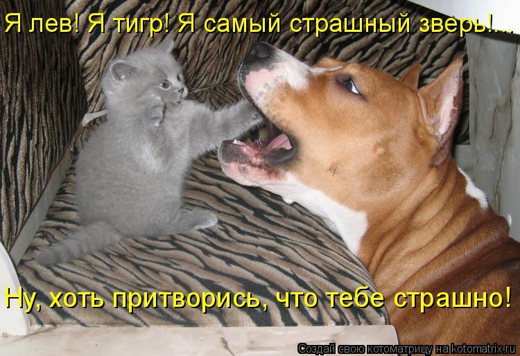 Котоматрица: Я лев! Я тигр! Я самый страшный зверь!...  Ну, хоть притворись, что тебе страшно!