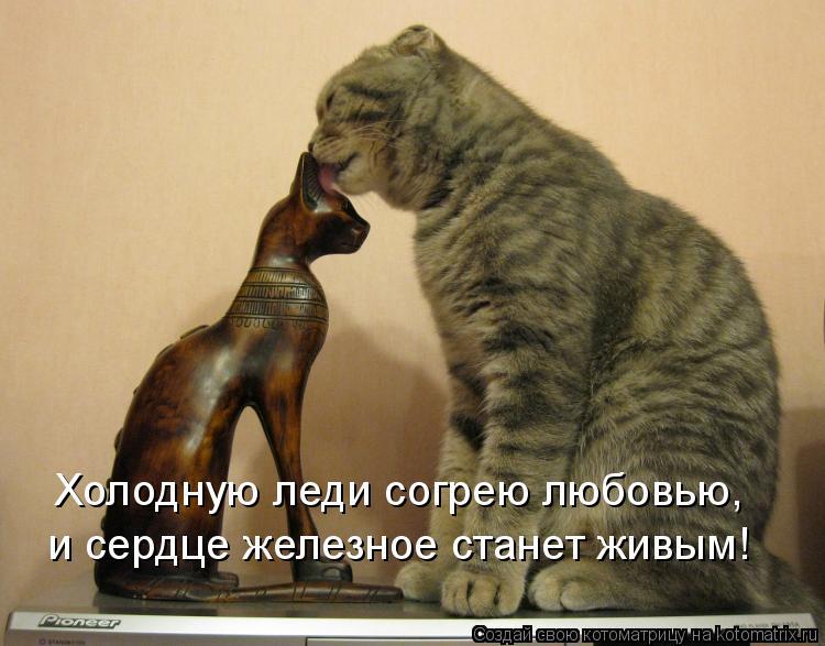 Котоматрица: Холодную леди согрею любовью, и сердце железное станет живым!