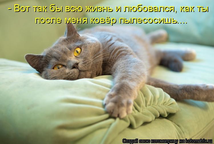 Котоматрица: - Вот так бы всю жизнь и любовался, как ты после меня ковёр пылесосишь....