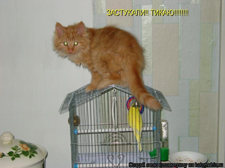 Котоматрица: ЗАСТУКАЛИ!! ТИКАЮ!!!!!!!!