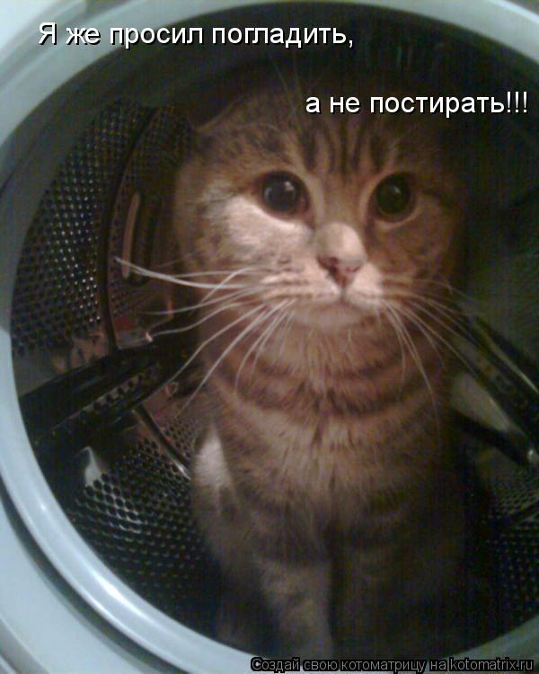 Котоматрица: Я же просил погладить, а не постирать!!!