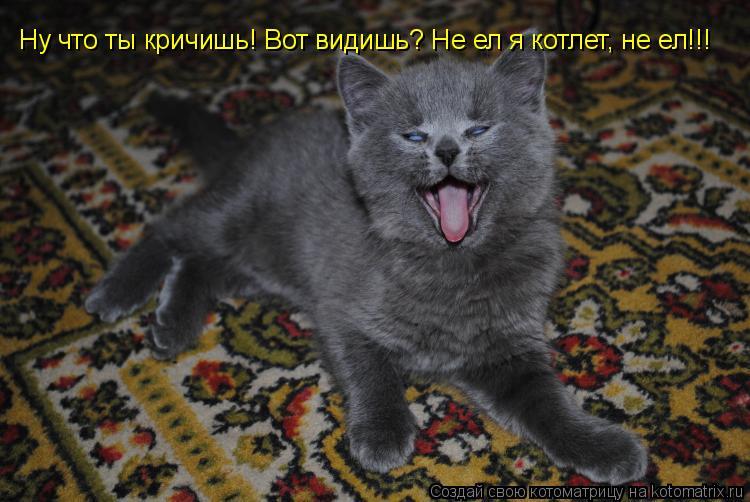 Котоматрица: Ну что ты кричишь! Вот видишь? Не ел я котлет, не ел!!!