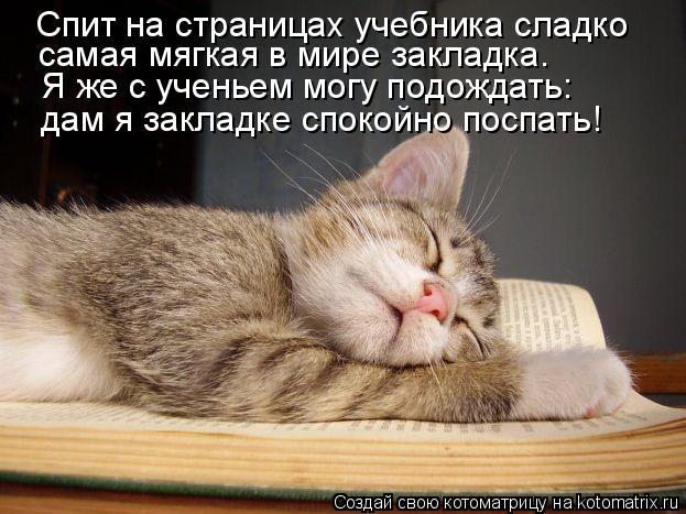Котоматрица: Спит на страницах учебника сладко самая мягкая в мире закладка. Я же с ученьем могу подождать: дам я закладке спокойно поспать!