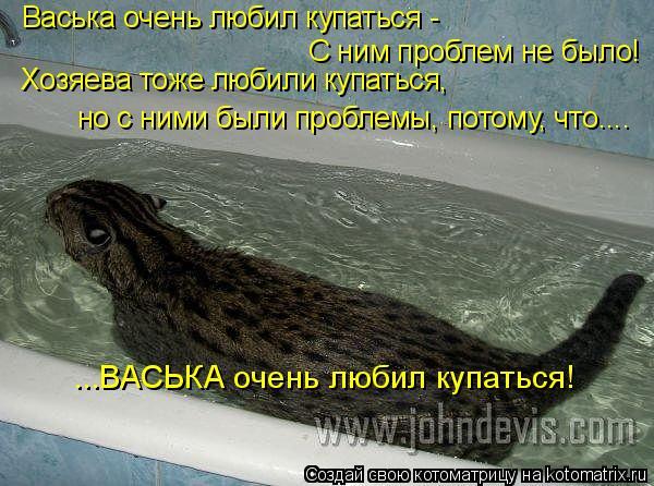 Котоматрица: С ним проблем не было! Хозяева тоже любили купаться, но с ними были проблемы, потому, что.... ...ВАСЬКА очень любил купаться! Васька очень любил