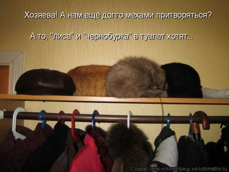 """Котоматрица: Хозяева! А нам ещё долго мехами притворяться? А то, """"лиса"""" и """"чернобурка"""" в туалет хотят..."""