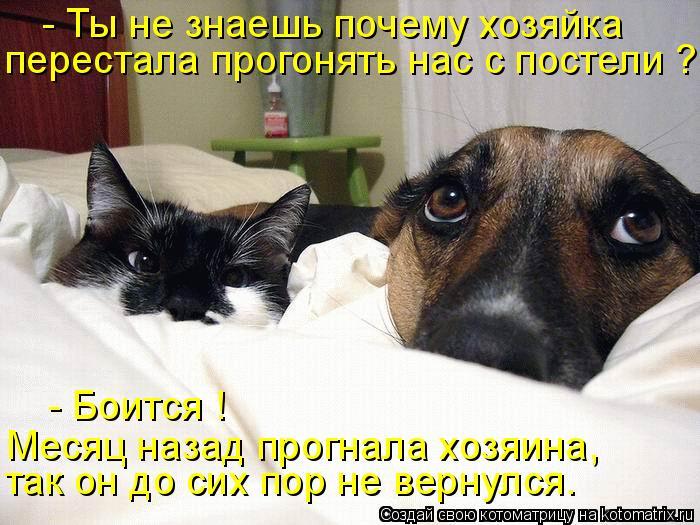 Котоматрица - перестала прогонять нас с постели ? - Ты не знаешь почему хозяйка так