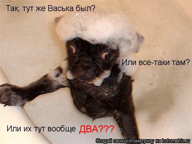 Котоматрица: Так, тут же Васька был? Или все-таки там? Или их тут вообще ДВА???