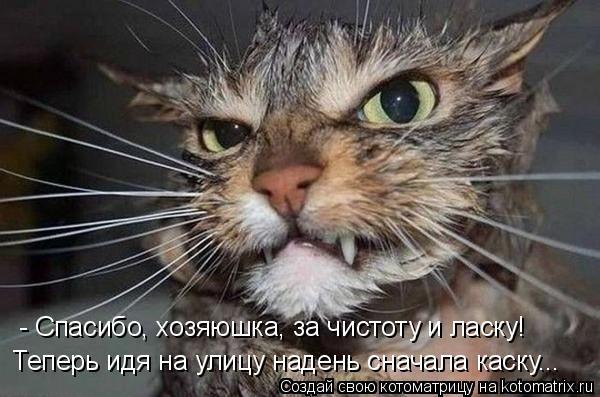 Котоматрица: - Спасибо, хозяюшка, за чистоту и ласку! Теперь идя на улицу надень сначала каску...