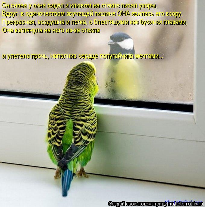 Котоматрица: Он снова у окна сидел и клювом на стекле писал узоры. Вдруг, в одиночеством звучащей тишине ОНА явилась его взору. Прекрасная, воздушна и лег