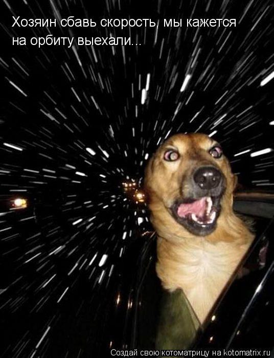 Котоматрица - Хозяин сбавь скорость, мы кажется  на орбиту выехали...