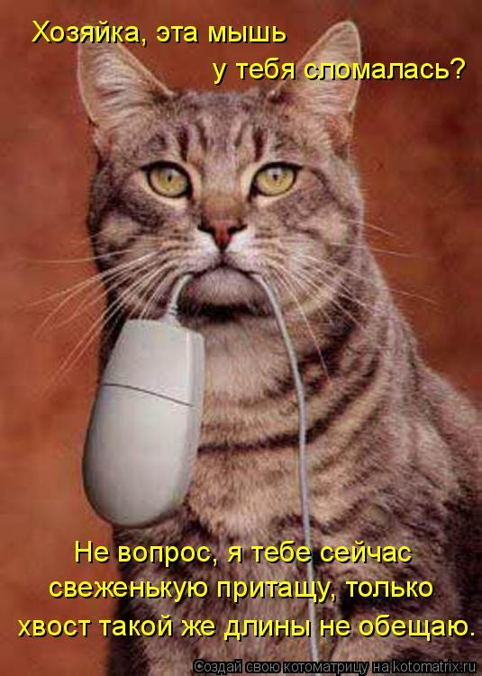 Котоматрица: Хозяйка, эта мышь   у тебя сломалась? свеженькую притащу, только Не вопрос, я тебе сейчас хвост такой же длины не обещаю.