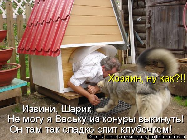 Котоматрица: Хозяин, ну как?!! Извини, Шарик! Не могу я Ваську из конуры выкинуть! Он там так сладко спит клубочком!