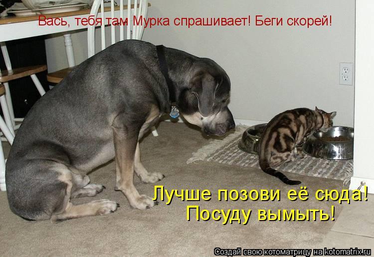 Котоматрица: Вась, тебя там Мурка спрашивает! Беги скорей! Лучше позови её сюда! Посуду вымыть!
