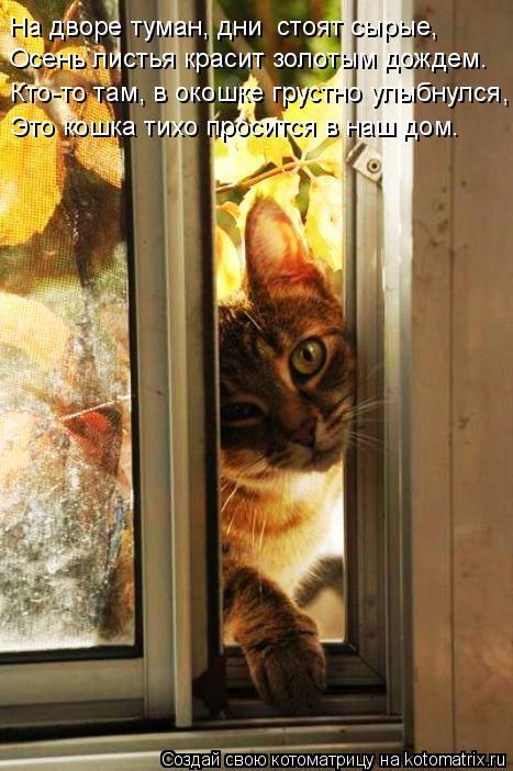Котоматрица: На дворе туман, дни  стоят сырые, Осень листья красит золотым дождем. Кто-то там, в окошке грустно улыбнулся, Это кошка тихо просится в наш до