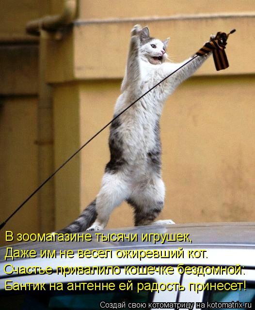 Котоматрица: В зоомагазине тысячи игрушек,  Даже им не весел ожиревший кот. Счастье привалило кошечке бездомной: Бантик на антенне ей радость принесет!