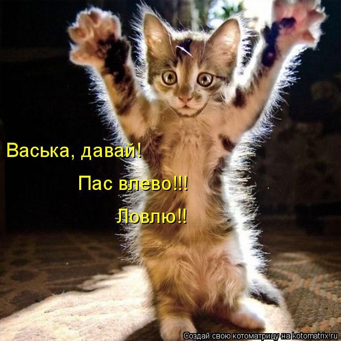 Котоматрица: Васька, давай!  Пас влево!!! Ловлю!!