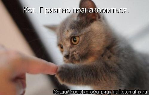 Котоматрица: Кот. Приятно познакомиться.
