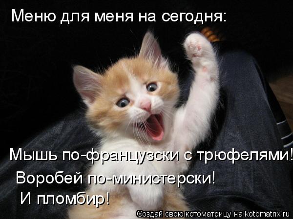 Котоматрица: Меню для меня на сегодня:  Мышь по-французски с трюфелями!  Воробей по-министерски!    И пломбир!