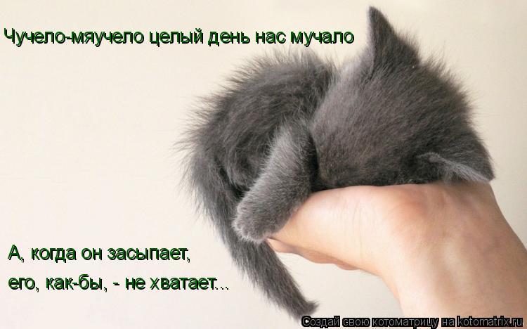 Котоматрица: Чучело-мяучело целый день нас мучало А, когда он засыпает, его, как-бы, - не хватает...
