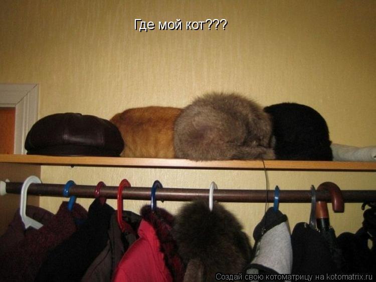 Котоматрица: Где мой кот???