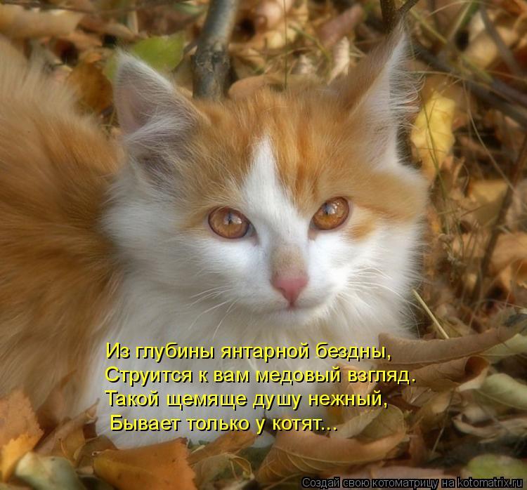 Котоматрица: Из глубины янтарной бездны, Струится к вам медовый взгляд. Такой щемяще душу нежный, Бывает только у котят...