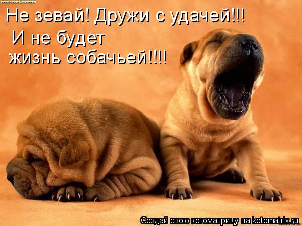 Котоматрица: Не зевай! Дружи с удачей!!!  И не будет  жизнь собачьей!!!!