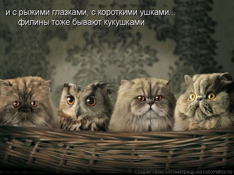 Котоматрица: и с рыжими глазками, с короткими ушками... филины тоже бывают кукушками